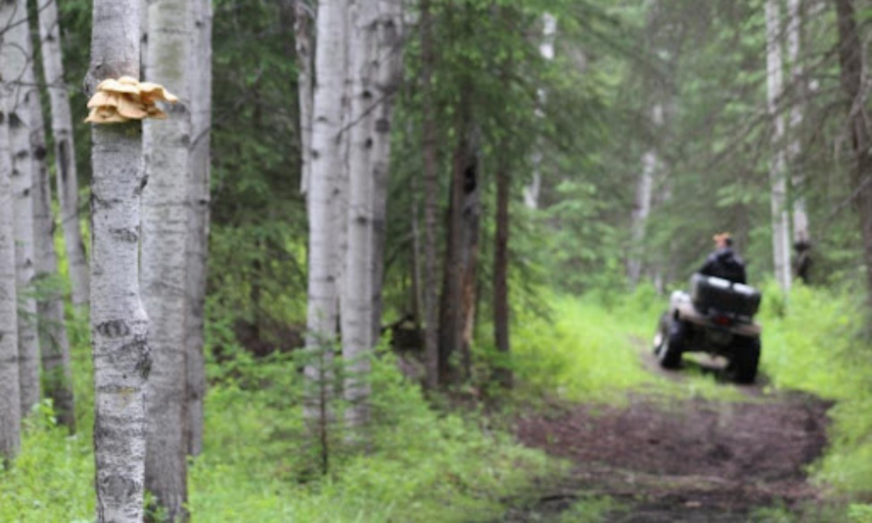 Trent Payne traveling the Cheslatta Trail by ATV.