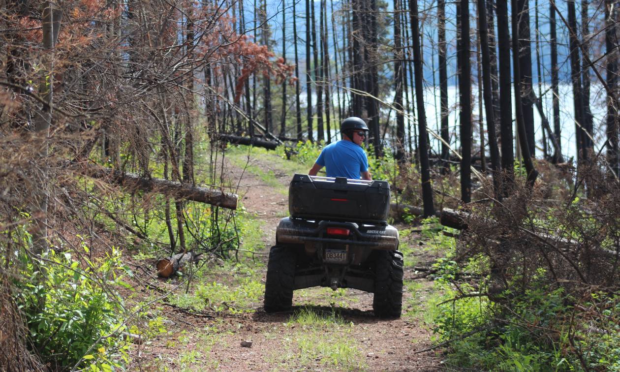 An ATVer rides a section of the Cheslatta Trail where trees show signs of being burnt from forest fires.