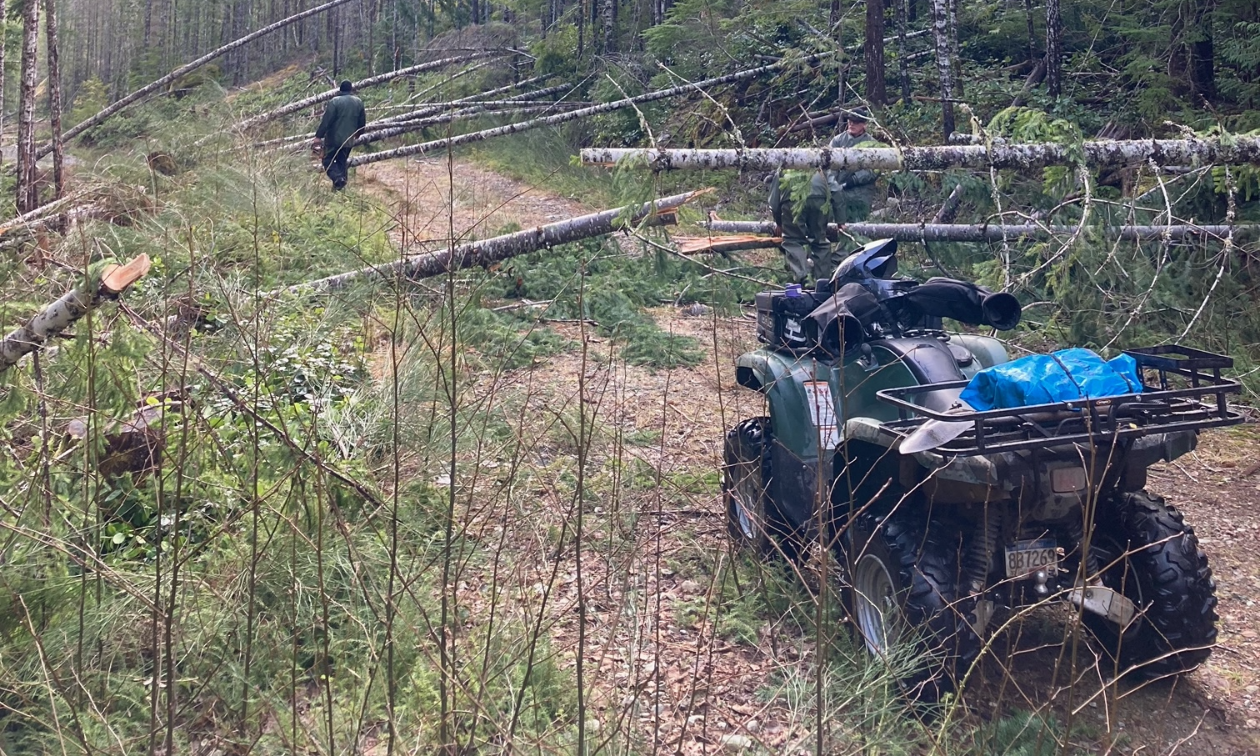 A green ATV is parked on a trail that is obstructed by a line of downed trees.