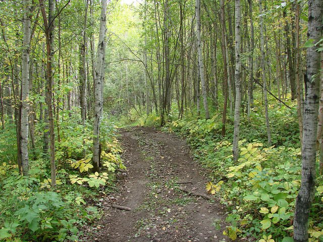 An example of some of the amazing trails at Rocky Top ATV Park outside of Westlock, AB.