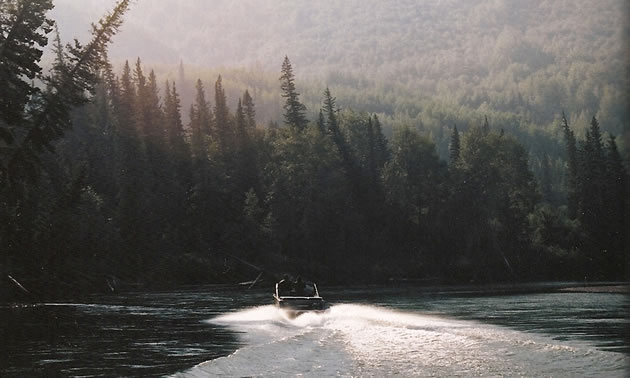 A jet boat is going down the river with evergreens on the banks.
