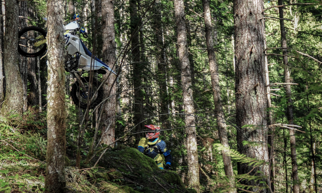 A rider is stuck amongst dense trees during the Kirk
