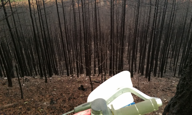 Burnt trees litter a Bull Mountain ridgeline after the fire where a trail used to run.