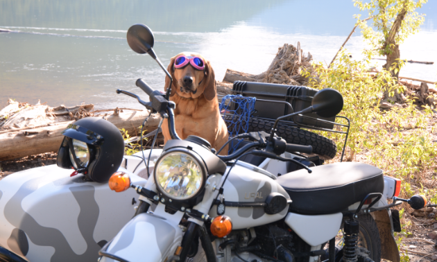 Dergousoff's red bone hound Wilma sits in the 2017 Ural Gearup near a lake