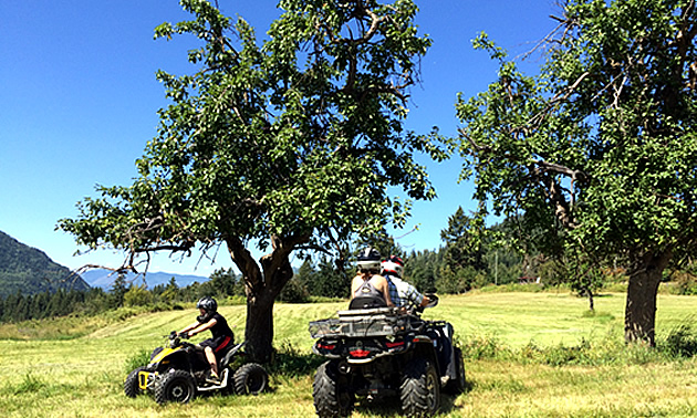 Eric Buckley, Nicole Lind and Will Buckley are quadding around apple trees in the Pend d'Oreille.
