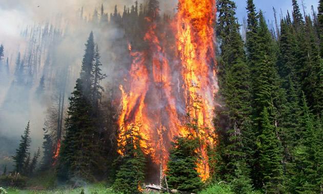 Tree on fire.