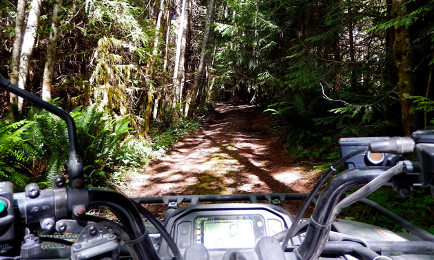 Looking behind the handlebars of a quad at a forested trail.