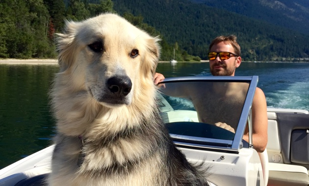 A dog sitting on the bow of the boat in the forground, while a man in the background is driving.