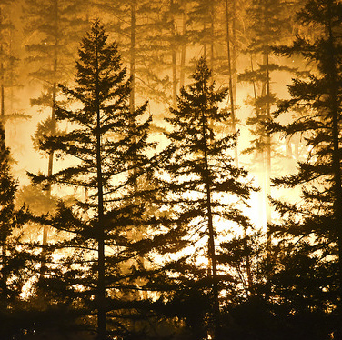 A forest fire silhouetted against the night sky.