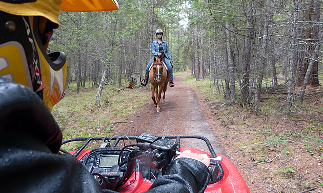 A horseback rider trails behind an ATVer on a trail through the woods.