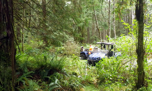 Two ATVs in a verdant forest on Vancouver Island.