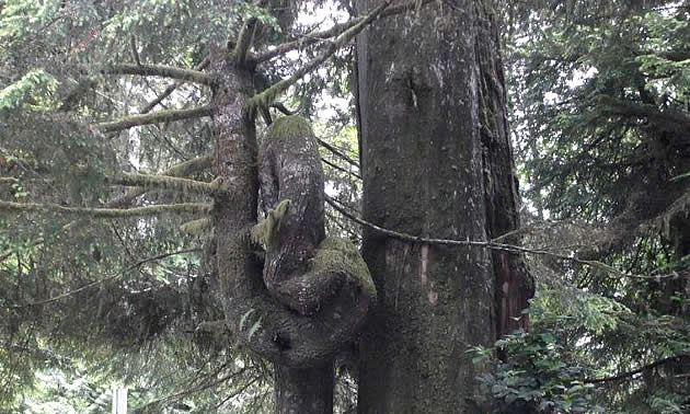 Undergrowth in a dense forest.